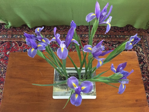 Birthday Irises         ©Zebra's Child